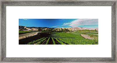 Vineyard, Marlborough Region, South Framed Print by Panoramic Images