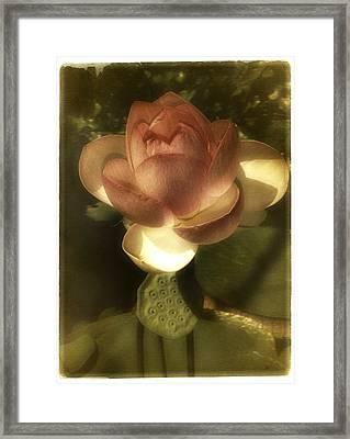 Vintage Lotus Framed Print