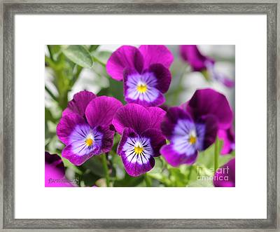 Viola Named Sorbet Plum Velvet Jump-up Framed Print