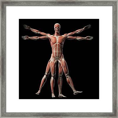 Vitruvian Man Muscles Framed Print