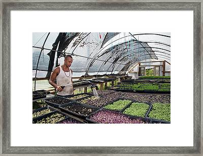 Volunteer At An Urban Farm Framed Print by Jim West