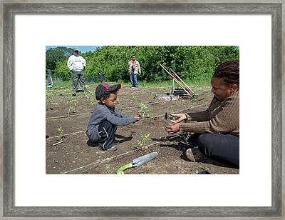Volunteers At An Urban Farm Framed Print by Jim West