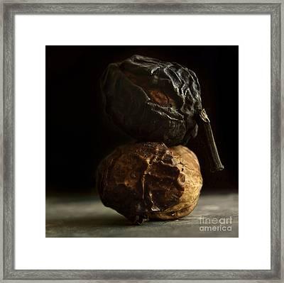 Walnut Framed Print