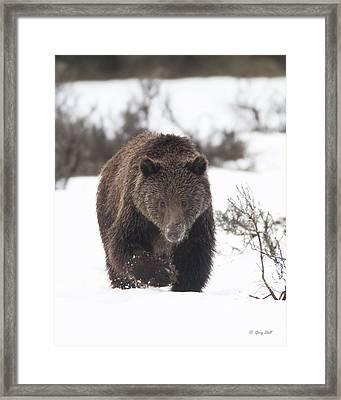 Wanna Play Framed Print by Gerry Sibell
