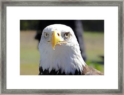 Watching You Framed Print by Dennis Dugan