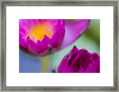 Waterlily Dream Framed Print