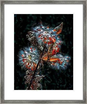 Weed Galaxy  Framed Print by Steve Harrington