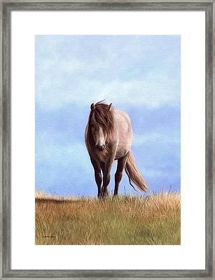Welsh Pony Painting Framed Print by Rachel Stribbling