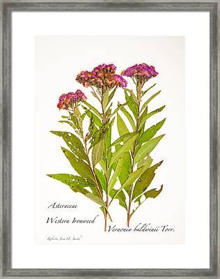 Western Ironweed Framed Print