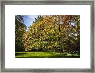 Westonbirt Arboretum Framed Print by Amanda Elwell