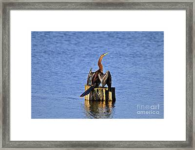 Wet Wings Framed Print by Al Powell Photography USA