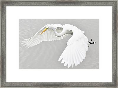 What A Beauty Framed Print by Paulette Thomas