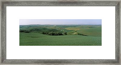 Wheat Crop In The Field, Washington Framed Print