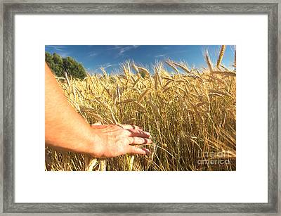 Wheat Field Framed Print by Michal Bednarek