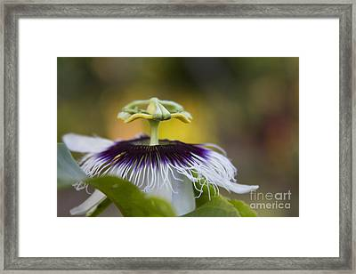 Whispers Of The Heart Framed Print by Sharon Mau