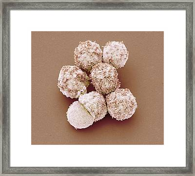 White Blood Cells Framed Print