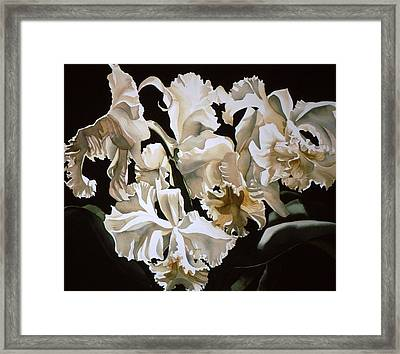 white Cattleya orchids Framed Print by Alfred Ng