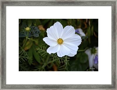 White Flower Framed Print by Alex King