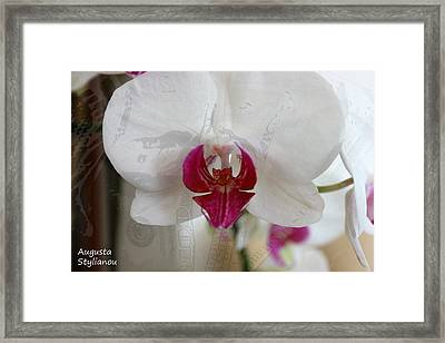 White Orchid Framed Print by Augusta Stylianou