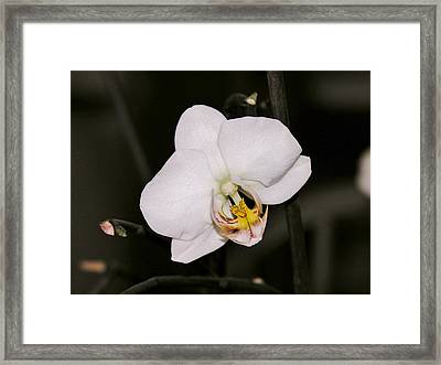 Framed Print featuring the photograph White Orchid by Sherman Perry