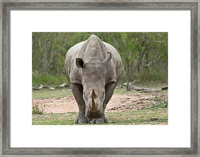 White Rhino Framed Print by Bob Gibbons