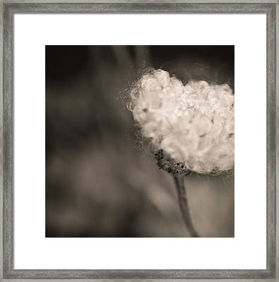 White Whisper Framed Print by Sara Frank