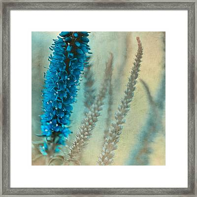 Wild And Free Framed Print by Bonnie Bruno