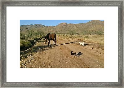 Three Friends On The Range Framed Print