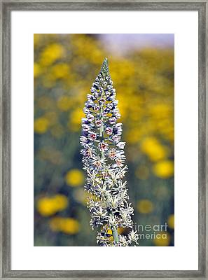 Framed Print featuring the photograph Wild Mignonette Flower by George Atsametakis