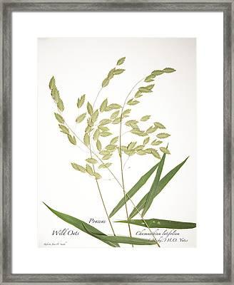 Wild Oats Framed Print