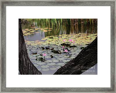 Wild Water Lilies In The River Framed Print by Sabrina L Ryan
