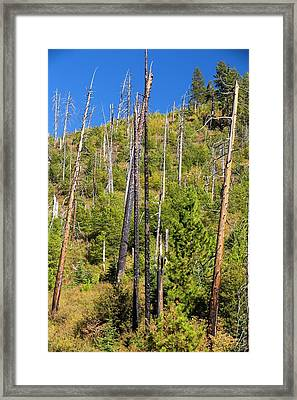 Wildfire Damage In Yosemite Framed Print