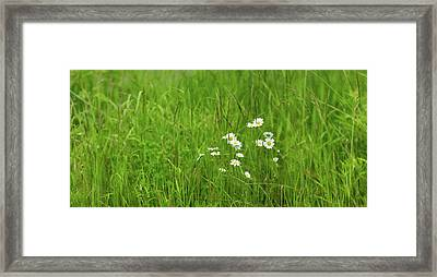 Wildflowers In A Field, Gooseberry Framed Print