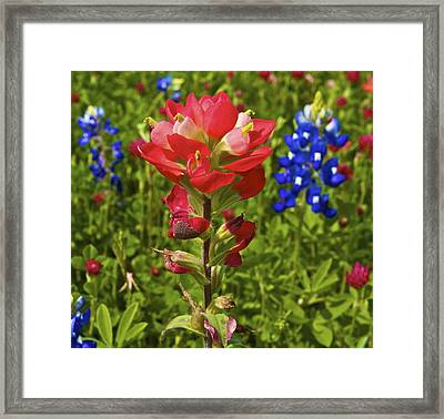 Framed Print featuring the  Wildflowers by John Babis