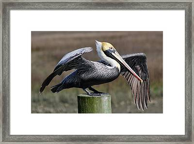 Wing Down Framed Print by Paulette Thomas