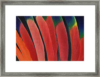 Wing Feather Design From The Amazon Framed Print