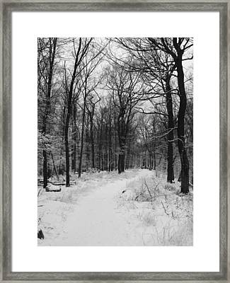 Winter Forest Framed Print by Eva Csilla Horvath