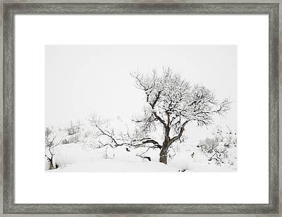 Framed Print featuring the photograph Winter Sage by Sandi Mikuse