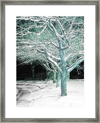 Winter Trees Framed Print by Guy Ricketts