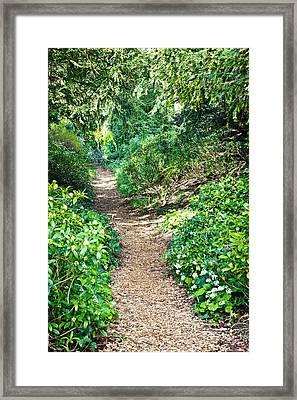 Woodland Path Framed Print by Tom Gowanlock