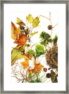 Woodsy Arrangement Framed Print by Suzanne Powers