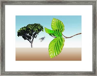 Woolly Beech Aphid Framed Print by Mikkel Juul Jensen