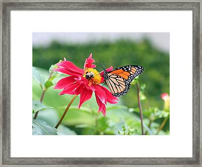 Framed Print featuring the photograph Working Together by Karen Silvestri