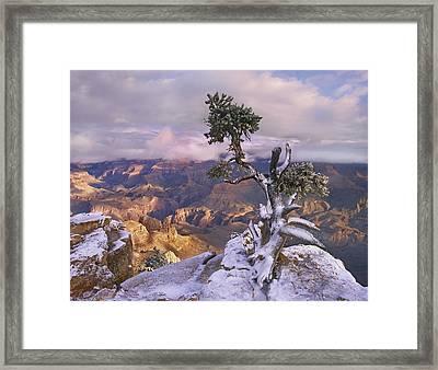 Yaki Point Framed Print by Tim Fitzharris