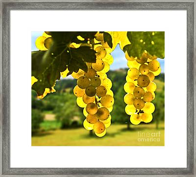 Yellow Grapes Framed Print