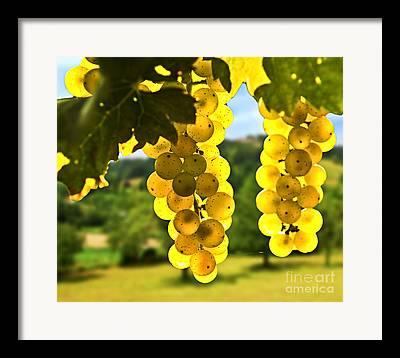 Chardonnay Photographs Framed Prints