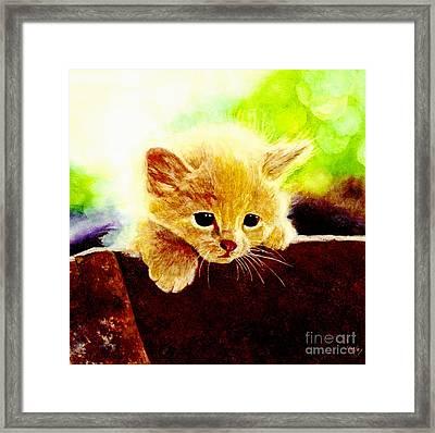 Yellow Kitten Framed Print