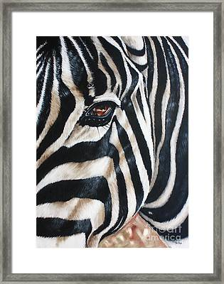 Zebra Framed Print by Ilse Kleyn