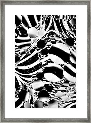 Framed Print featuring the photograph Zebra Through Oil by Geraldine Alexander