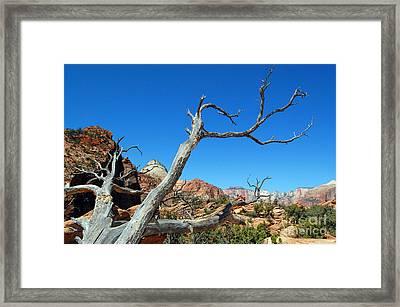 Zion Reaching Tree Framed Print by Debra Thompson